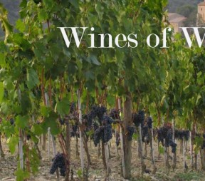 Wines of Worth : Brunello di Montalcino
