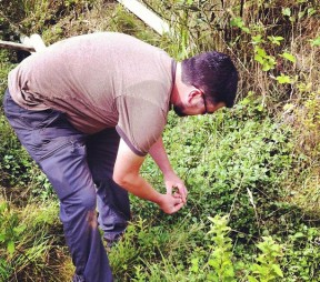 Foraging for watercress. Photo courtesy of Forage